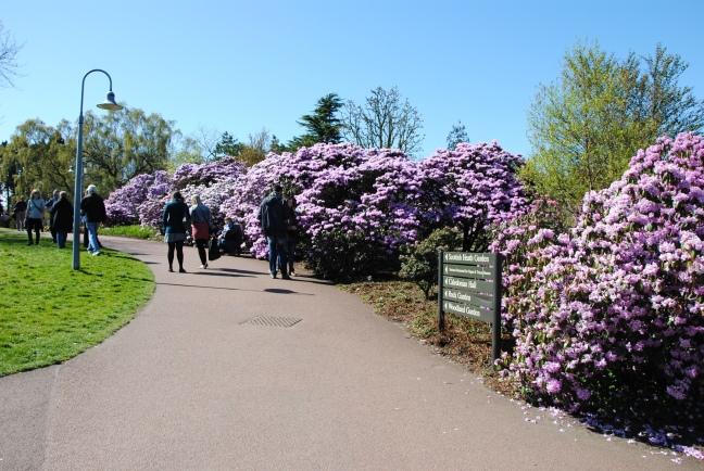 Spring blossoms at Royal Botanical Gardens