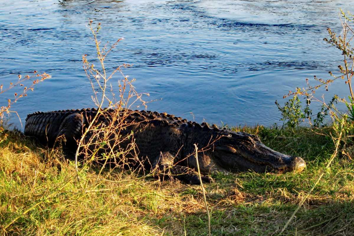 Nature Parks Gainesville Fl