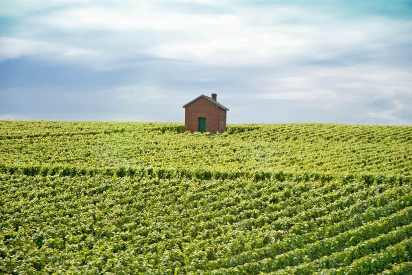 A Champagne vineyard postcard