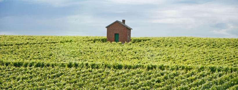 A Champagne vineyard postcard