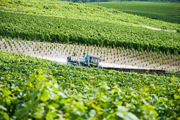 A tractor driving through a Champagne vineyard