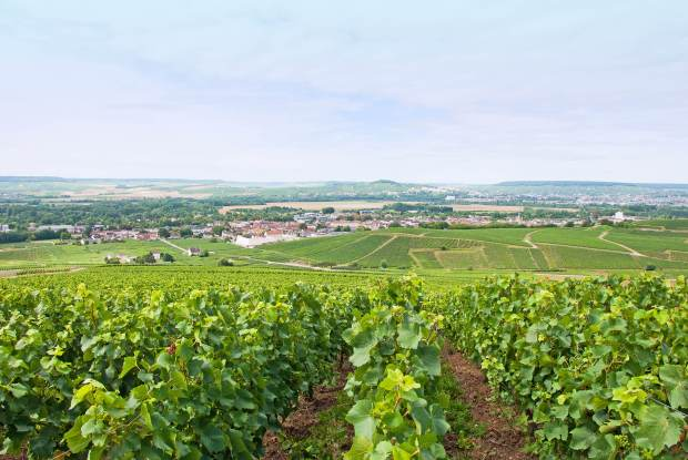 Overlooking Epernay from a vineyard