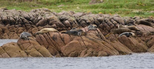 seals-mull-beyondourhorizons